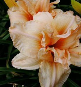 Цветы, растущие в тени
