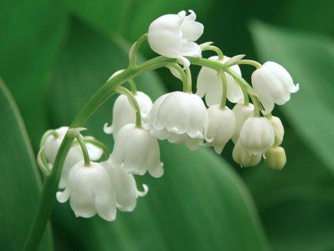 Цветы, растущие в тени и на участках, где мало света