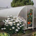 Осенняя обработка теплицы из поликарбоната – Весна в саду