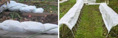 Как правильно укрыть малину на зиму, чтобы не вымерзла