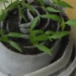 Как посеять семена в улитки, инструкция