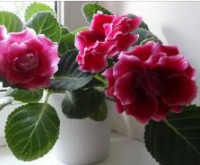Какие цветы можно держать в спальне – Весна в саду