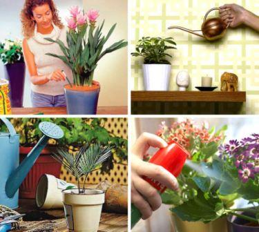 Уход за комнатными растениями, полив, температурный режим