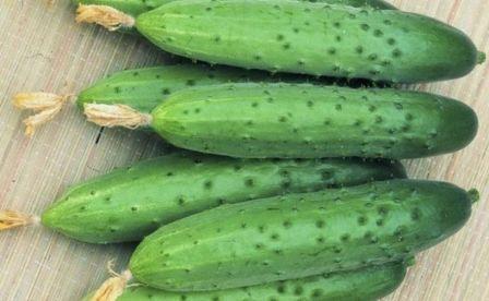 Популярные урожайные сорта огурцов для теплицы