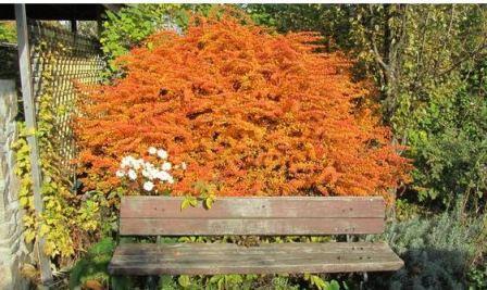Какими растениями украсить осенний сад