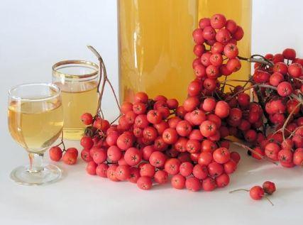 Рецепты домашних наливок и вин из красной рябины