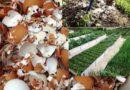 Яичная скорлупа — идеальное удобрение для огорода