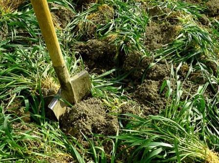 Сидеральные удобрения, их польза и выбор подходящей культуры