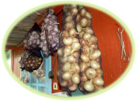 Как правильно хранить репчатый лук зимой, способы его заготовки
